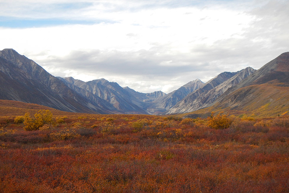 Alaska MooseHunting