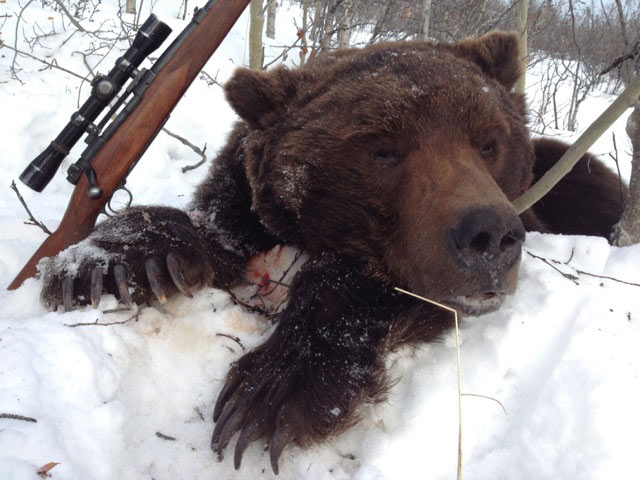 Our Alaska guided brown bear hunts harvest some really big bears.