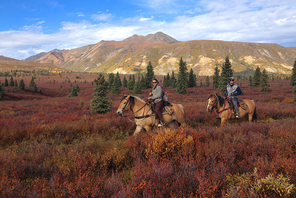 At Wrangell Outfitters we often go out on horseback for a wider range of bear hunting, and easier haul outs.