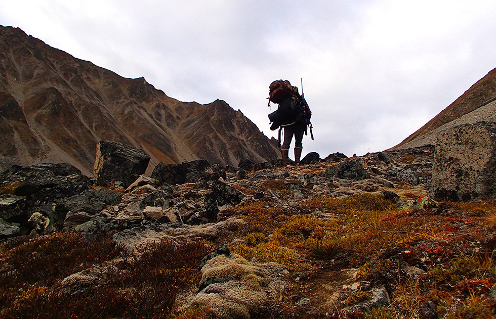 Hiking Wrangell-St.Elias Dall's Sheep country.