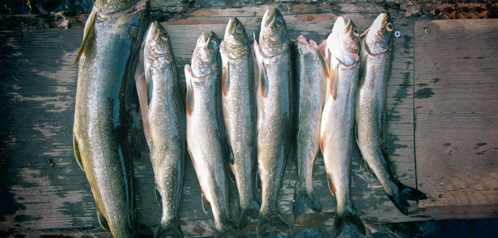 Wrangell Mountain fishing