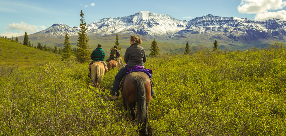 Horses of the Wrangell Mountains