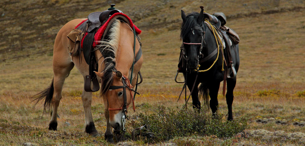 Wrangell Mountain guide horses